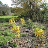 Guilford Salt Meadows Sanctuary Planting - IMG_7832.JPG
