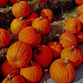by Howard Mattix - City,  Street & Park  Street Scenes ( orange, awrtistic, pumpkins, gourds, halloween,  )