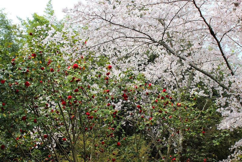 2014 Japan - Dag 8 - marjolein-IMG_1062-0027.JPG