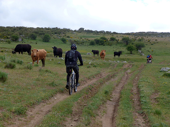 Unas fotos de nuestra ruta de Ávila a El Escorial - Junio 2013