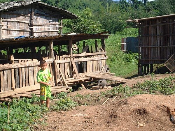 Les porcheries Yao n'ont rien d'industrielle !