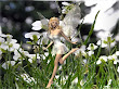 White Fairy On Flowers