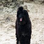 Ja, ik ben die hond van de startpagina. Mijn haren zijn al aardig bijgegroeid!.JPG