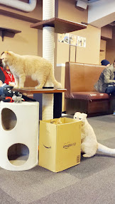 Calico Cat Cafe in Shinjuku, 2 floors of cats to play with or just sit around as you read manga or purchase beverages and snacks. Investigation of the noise that occurred by the box... what happened?