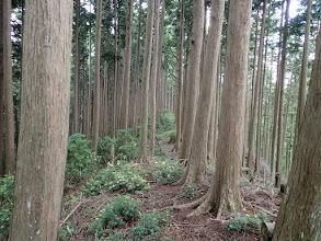 低木が生え始め