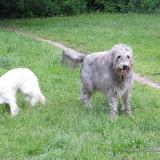 Wielki pies (31.05.2009r.)