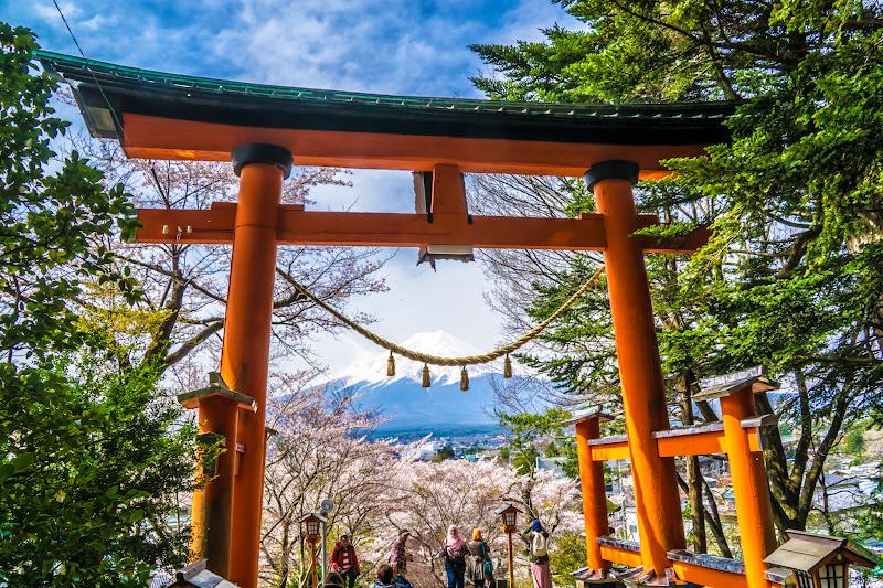 新倉富士浅間神社 桜 写真4