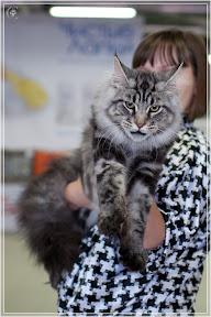 cats-show-24-03-2012-fife-spb-www.coonplanet.ru-036.jpg