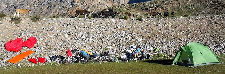 Zeltplatz mit morgendlichem Kuh-Verkehr, Koordinaten: N 41.667526, E 75.519762, Zentral-Kirgistan