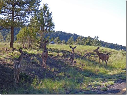 Deer, Ridgway State Park, Colorado