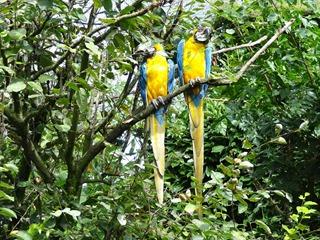 2016.09.02-013 aras bleu et jaune