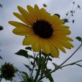 Gardening 2013 - 115_7241.JPG