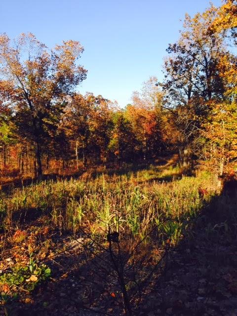 Anderson Creek Hunting Habitat - DeerHabitat006.JPG