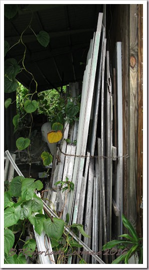 hurricane-plywood