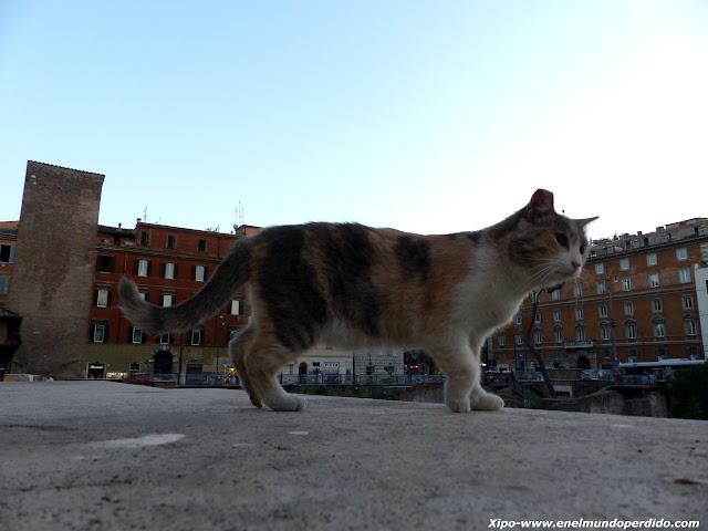 gato-callejero-roma.JPG