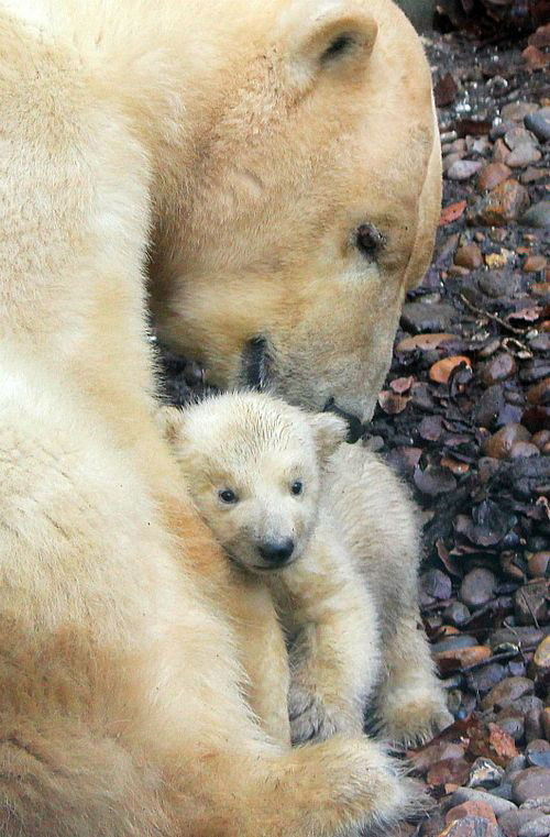 Nice Pictures of Baby Animals and Their Mothers 6
