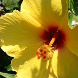 Gardening 2012 - IMG_3821.JPG