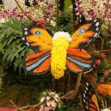 butterfly_flowers-dsc02183-a2_wp.JPG