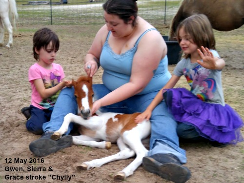 Sierra, Gwen & Grace handle Chylly - 12 may 2016