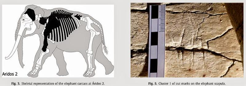 Restos del esqueleto hallados en Arganda y marcas de corte en uno de los huesos. Fuente: Journal of Archaelogical Science.
