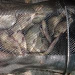 20140805_Fishing_Bochanytsia_029.jpg