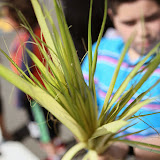 Palm Sunday - IMG_8649.JPG