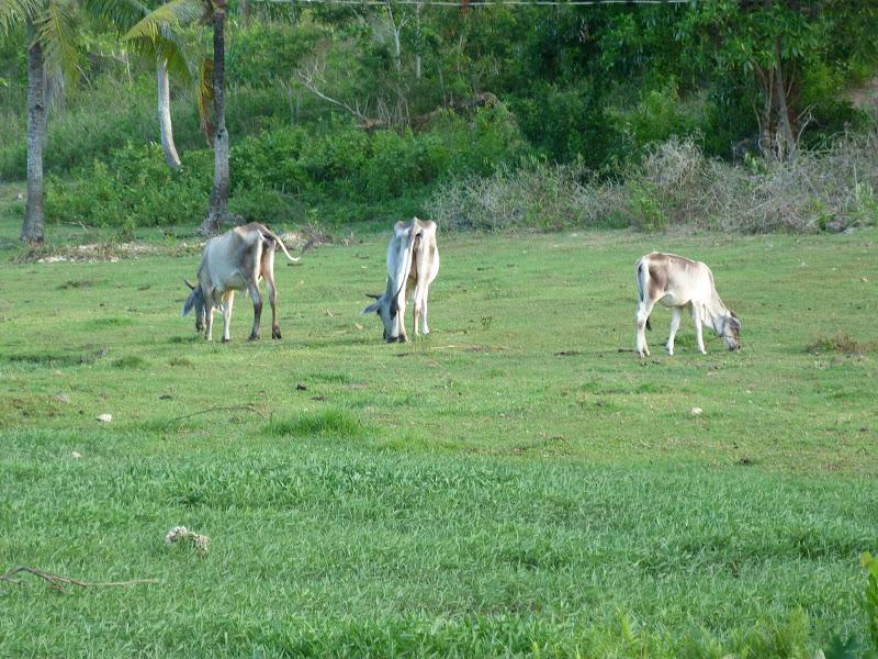 Camotes et Poron island - philippines1%2B1031.JPG