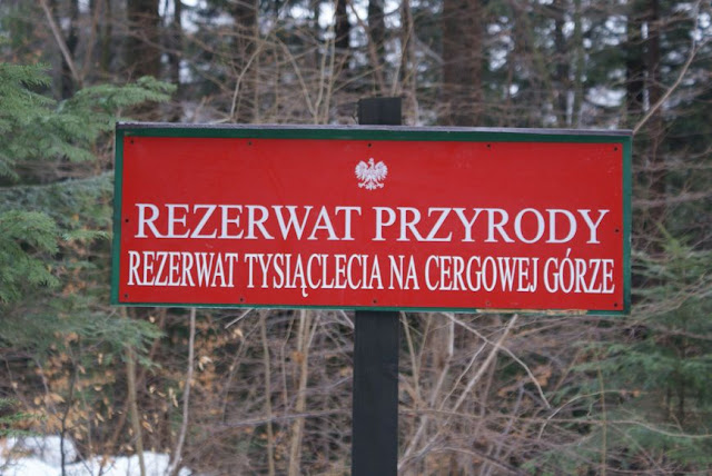 Zajęcia terenowe 29 lutego 2012 - DSC06203_1.JPG