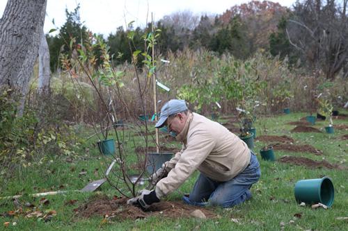 Hammo Fall Planting - Jim Murtagh - BC3G2527.jpg