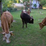 Domače živali-home animals - DSC_1389.jpg