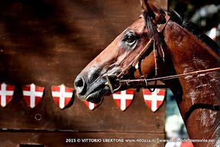 PALIO DI ASTI 2015 Prove Cavalli