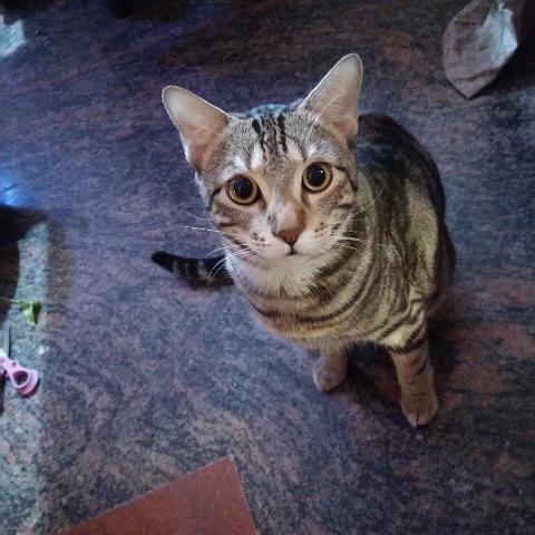 Gopal R