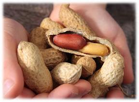 Arachide ou cacahuètes pour bébé Nouvelles découvertes