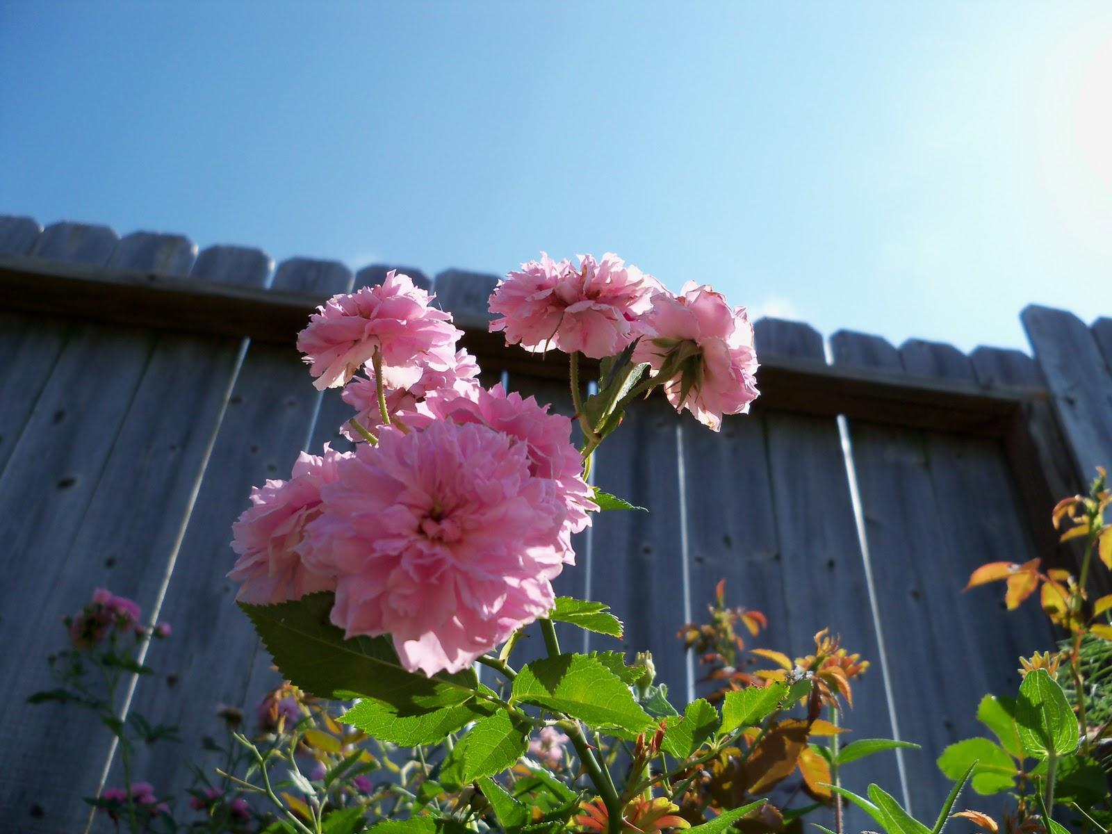 Gardening 2010, Part Two - 101_2604.JPG