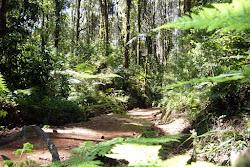Forêt Tropicale à 1900m.