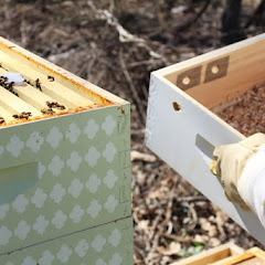 PLC Apiary - First%2Blook.JPG