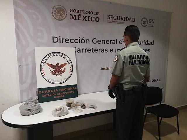 REFRENDA GUARDIA NACIONAL COMPROMISO CON EL MEDIO AMBIENTE Y ASEGURA CARGAMENTO CON 27 REPTILES EN YUCATÁN
