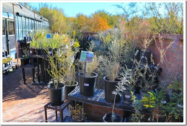 151230_Tucson_Tohono-Chul-Park_0080