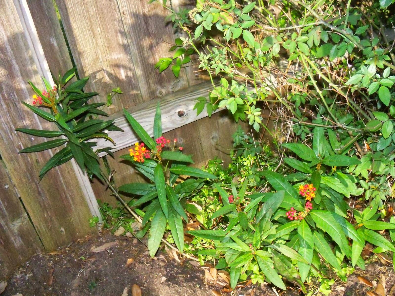 Gardening 2015 - 116_7660.JPG