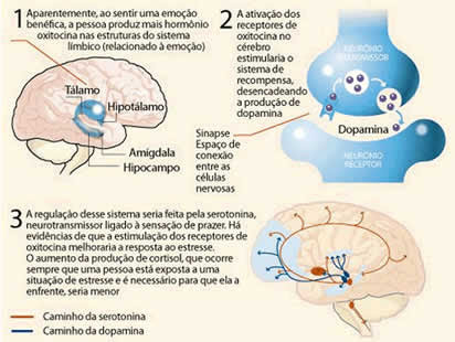 esquema das emoções no cérebro