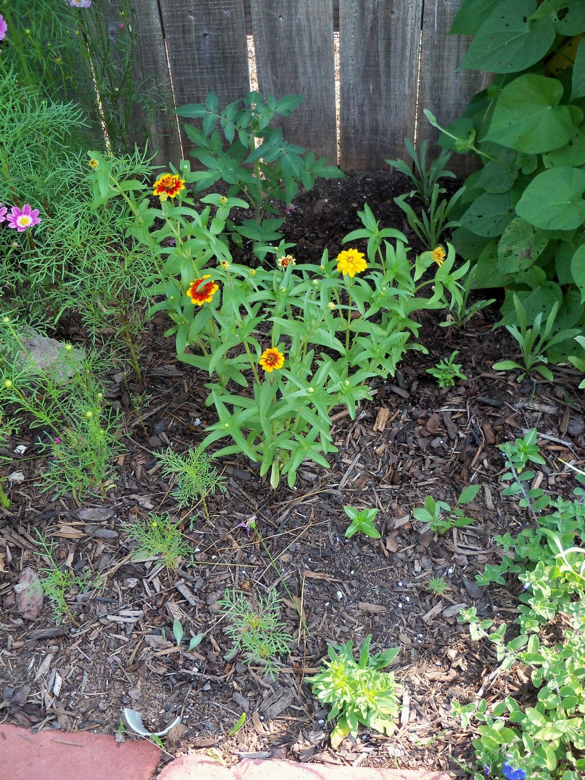 Gardening 2010, Part Two - 101_3052.JPG