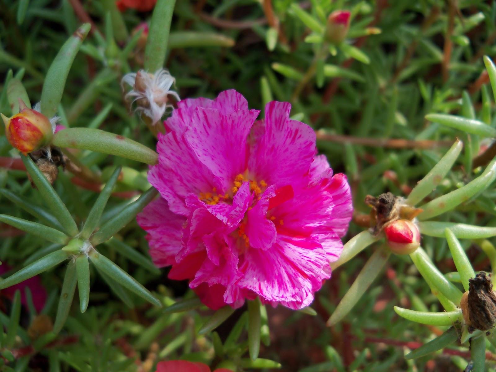 Gardening 2010, Part Two - 101_3307.JPG