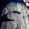 2006 Troop Campouts - PICT2638.jpg