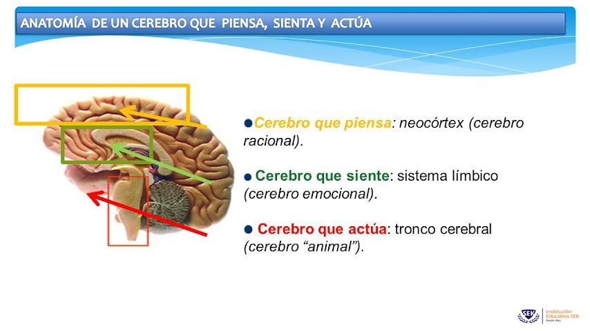 empatia-inteligencia-emocional-cerebro-educar-trabajar-la