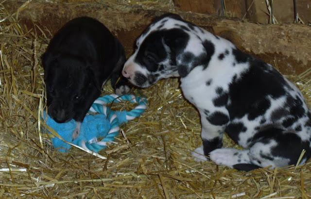 Gretta & Cobalt Blues 3/24/12 litter - SAM_3440.JPG