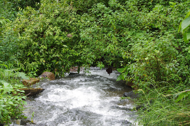 Vallée du Rio Guallupe, 1300 m (El Limonal, Imbabura, Équateur), 9 décembre 2013. Photo : J.-M. Gayman