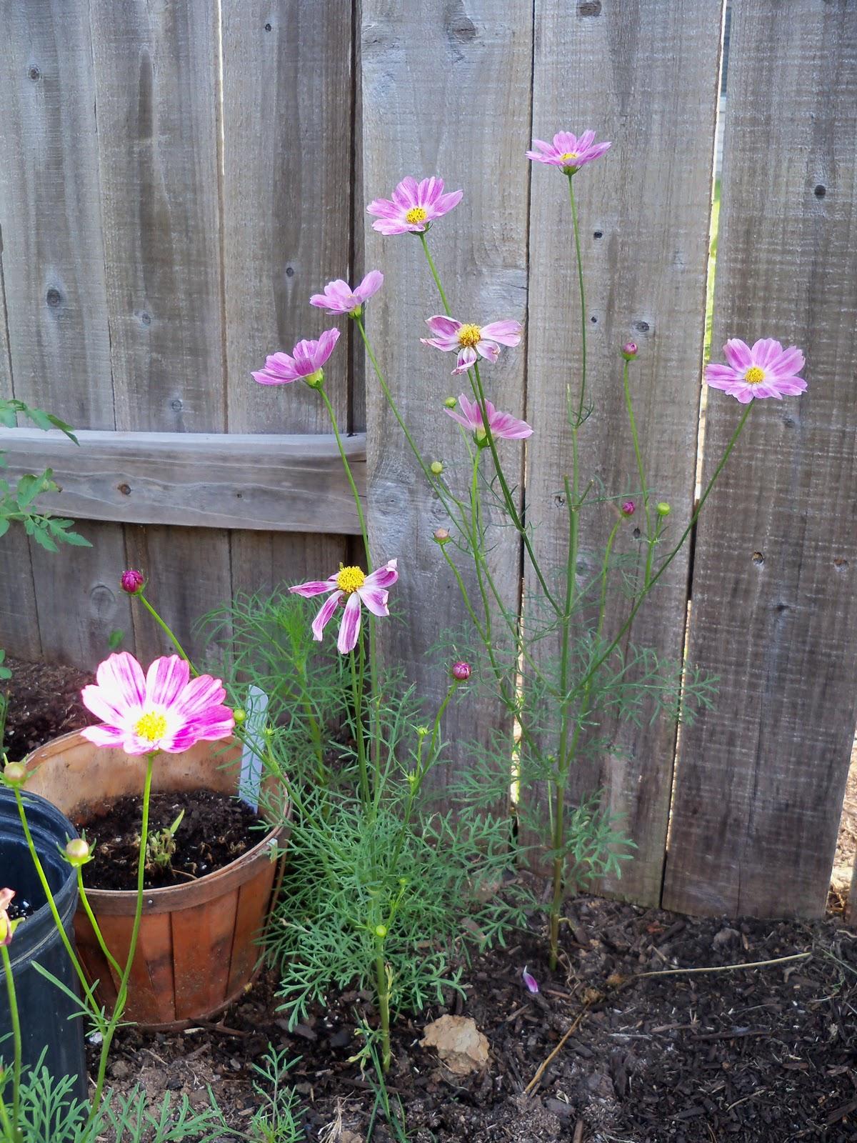 Gardening 2010, Part Two - 101_1879.JPG