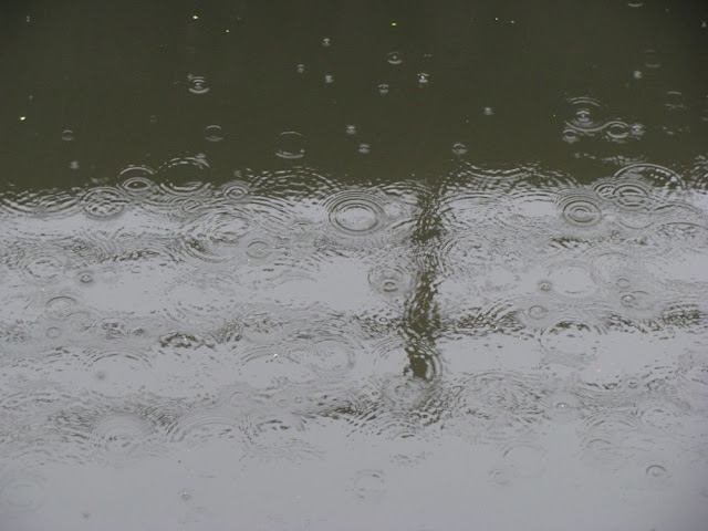 raindrops on the surface of Alewife Brook