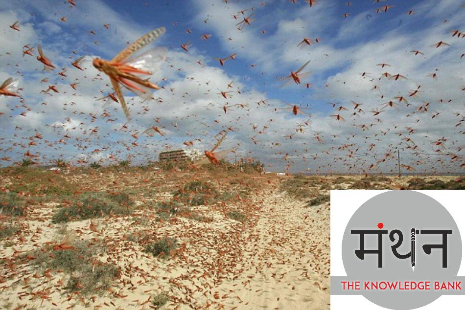 worst locust invasion in India