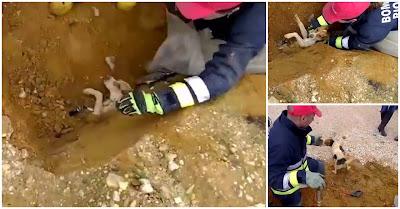 Bombeiros de Rio Maior salvam cão preso em tubo
